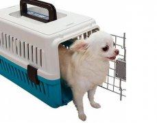 北京宠物托运公司